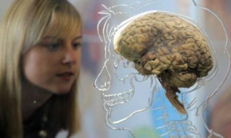 Creierul uman așa cum probabil nu știam că poate fi