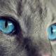 Dacă vrei să te înțeleagă pisica ta, cel mai bine e să-i faci cu ochiul