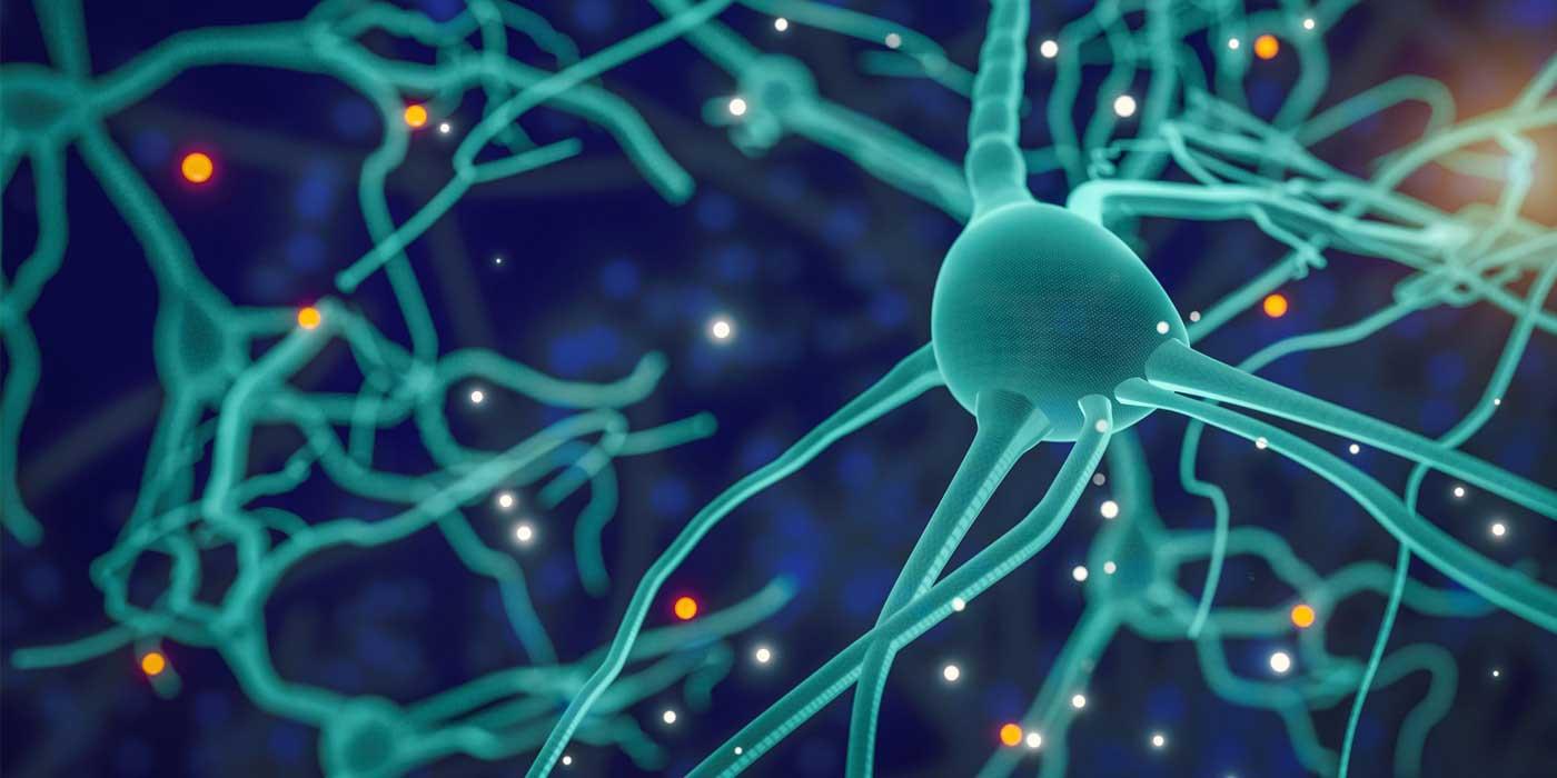 Câți neuroni sunt în creierul uman?