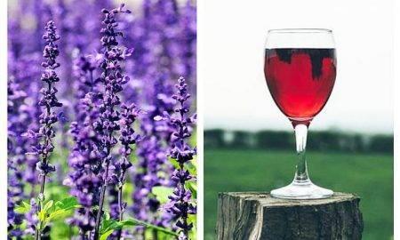Lavanda și beneficiile vinului de lavandă. O modalitate simplă de a-ți calma starea de agitație din corp