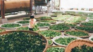 Două ceaiuri care vă vor ajuta să eliminați kilogramele nedorite în cel mai scurt timp