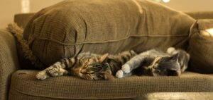 Pisicile, adevăratele remedii pentru sufletul trist sau pentru alte afecțiuni mai grave!