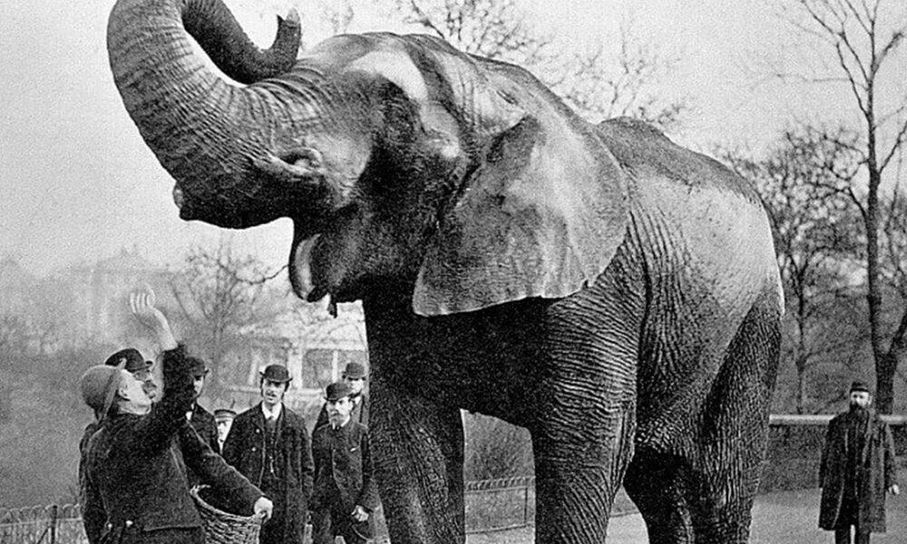 Povestea tristă a lui Mary, elefantul condamnat la moarte după ce a comis o crimă