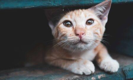Animalele din România, bătaia de joc a oamenilor fără suflet! Numărul abandonurilor este de neoprit