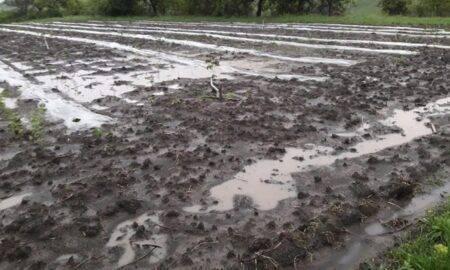 Nici anul acesta românii nu au legume! Ploaia a inundat mii de hectare, spre disperarea agricultorilor