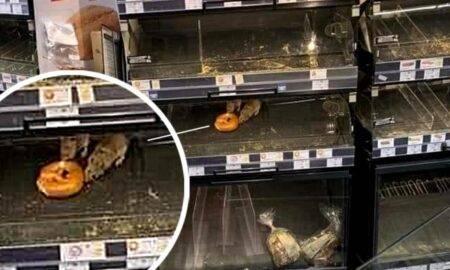 Doi șobolani au ieșit să ia masa la Mega Image! Reprezentanții lanțului de magazine își cer scuze de la clienți
