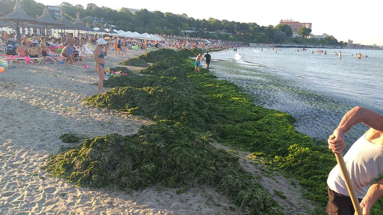 Concediul românilor, stricat! Peste 10.000 de tone de alge, strânse de pe litoral