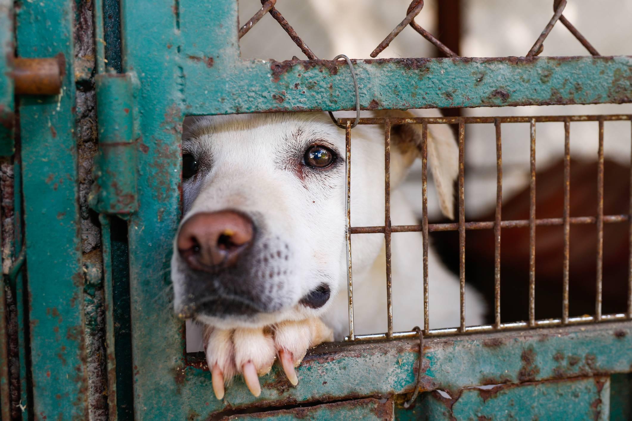 Misiune specială pentru Londra! Țara intervine în evacuarea câinilor și pisicilor din Kabul