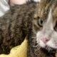 Gest de milioane făcut de voluntarii din Siberia! Și-au riscat viața salvând mai multe pisicuțe