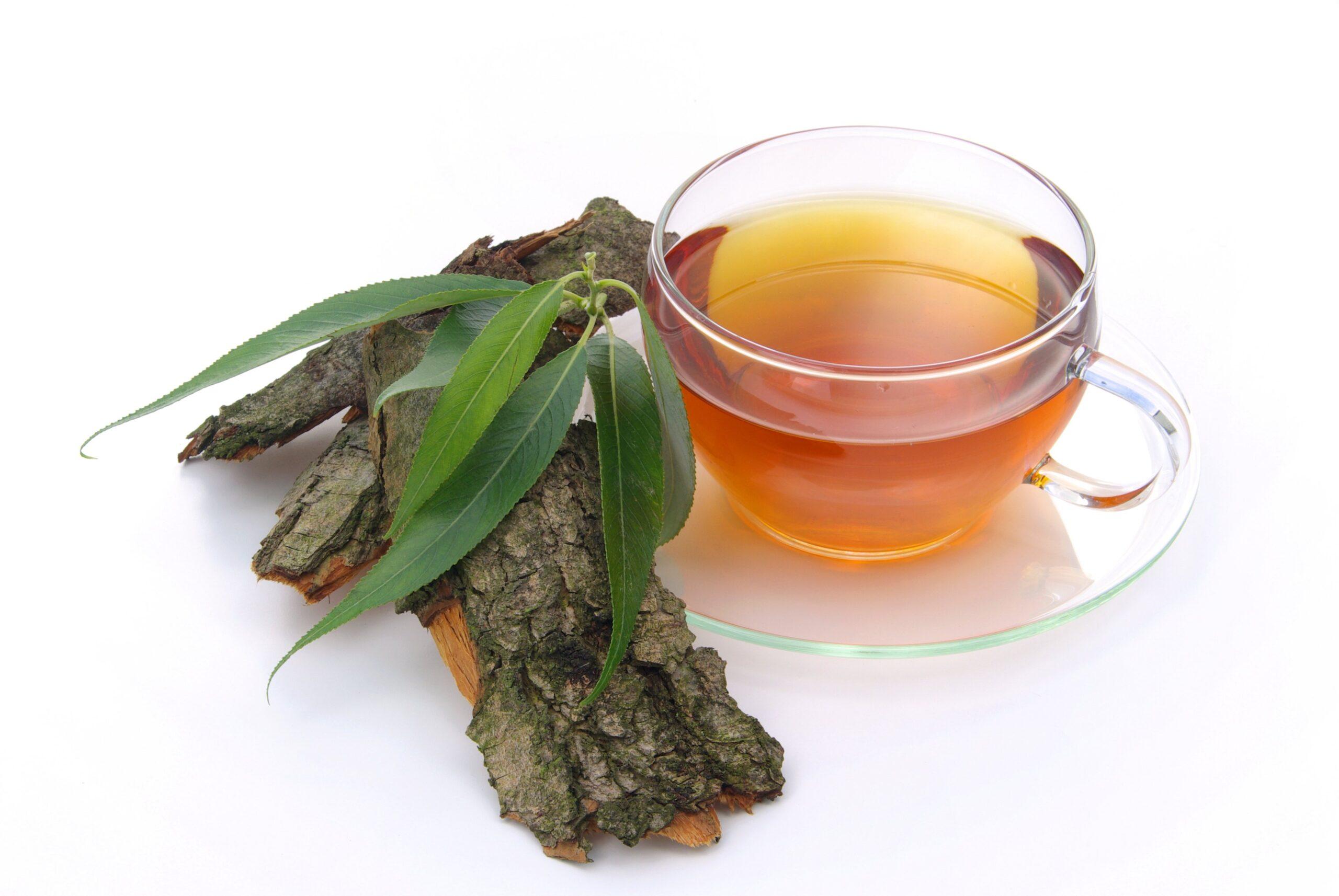 Ceaiul de salcie – tratament natural împotriva durerilor. Iată ce afecțiuni poți trata cu acest remediu