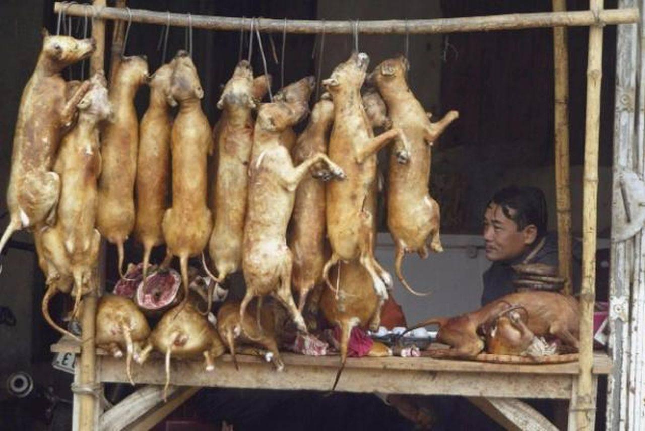Carnea de câine va fi interzisă! Președintele Coreei de Sud