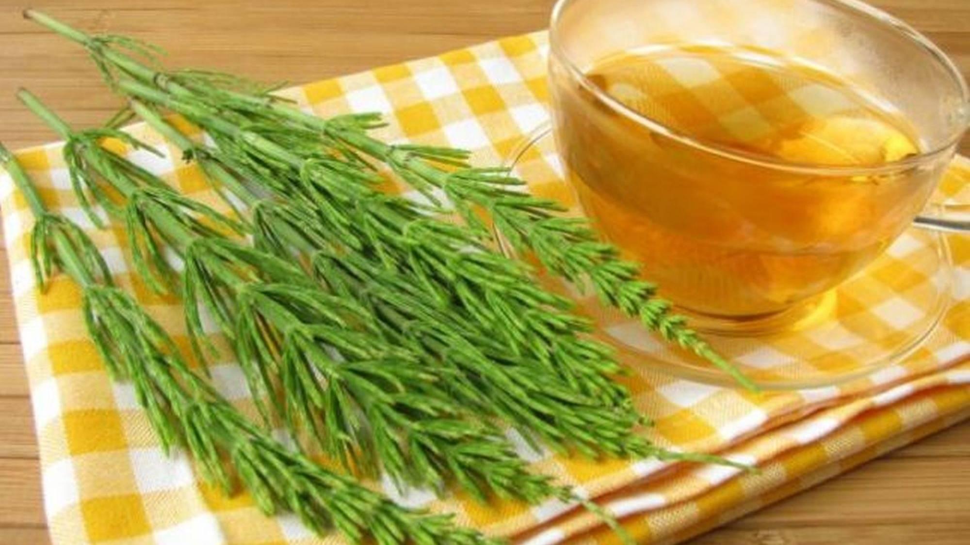 Ceaiul de coada calului, planta cu cea mai mare concentrație de siliciu! De ce e bine să îl bei toamna