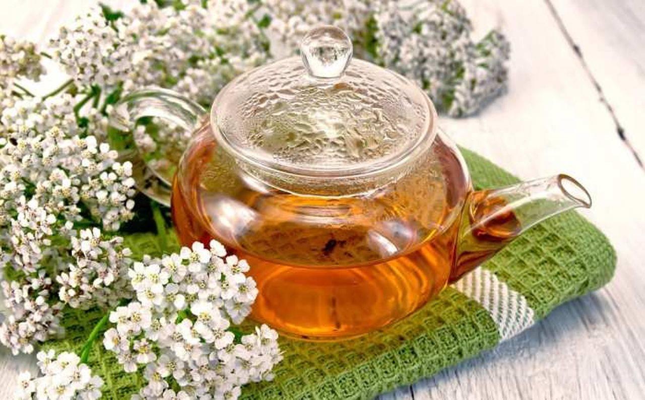 Ceaiul de coada șoricelului. Beneficii și contraindicații ale plantei cu cele mai mari proprietăți antiinflamatoare