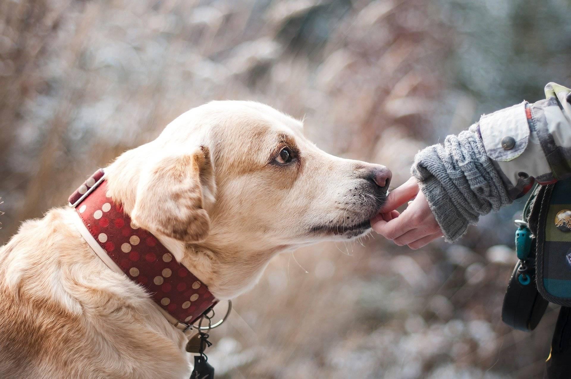 Cel mai important salvator al unei bătrâne a fost chiar propriul câine. Animalul i-a rămas alături aproape 30 de ore