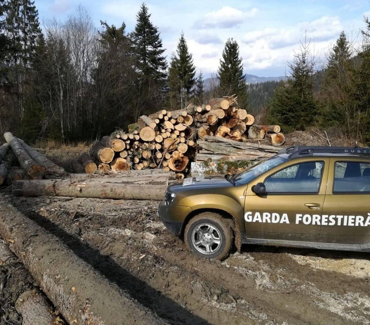 Prima reacție a Gărzii Forestiere, după ce doi jurnaliști și un activist de mediu au fost bătuți crunt