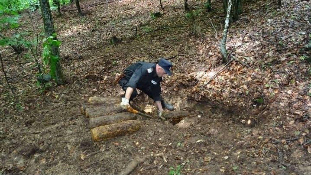 Mai multe bombe și grenade neexplodate, găsite într-o pădure din Neamț
