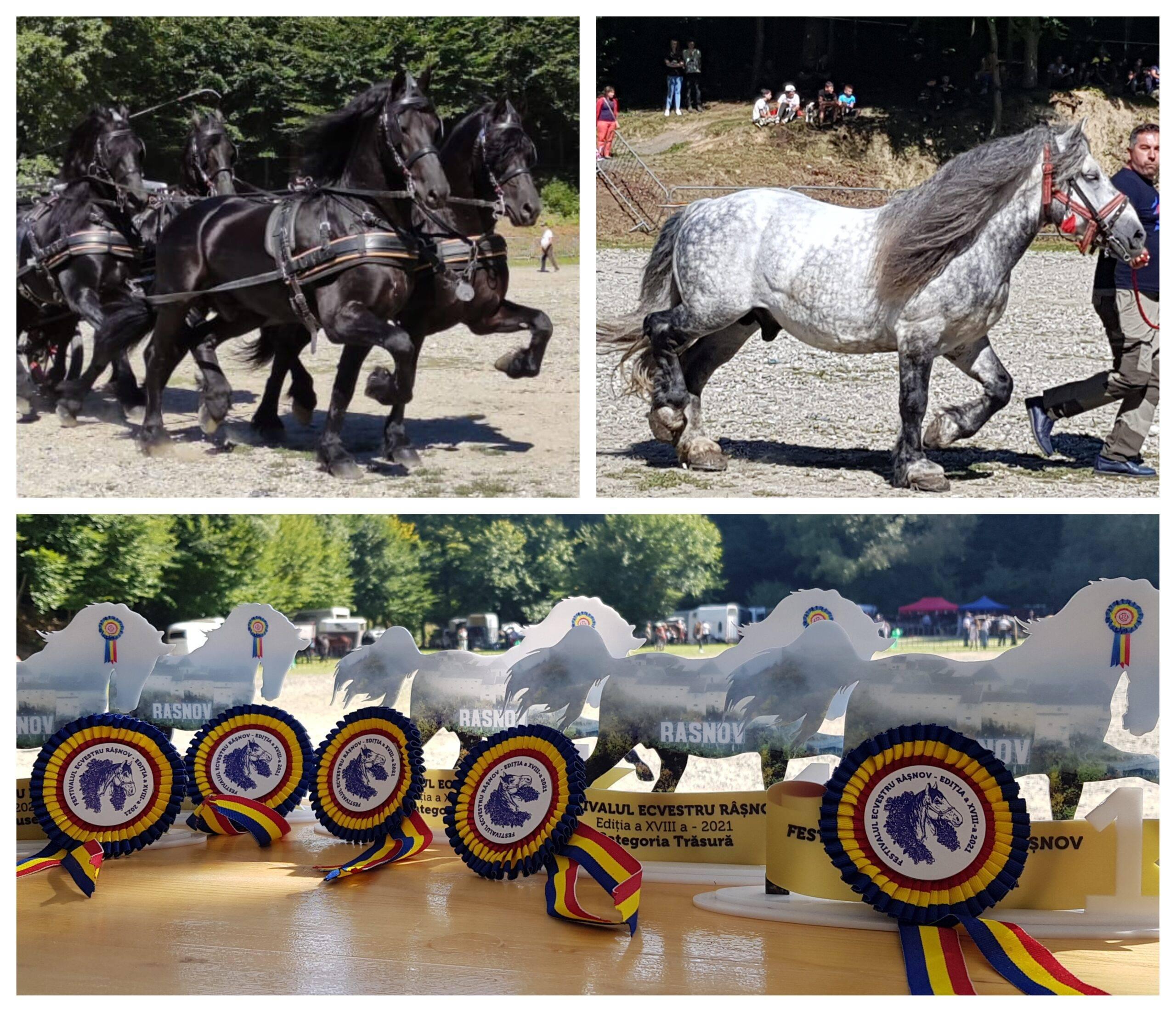 Festivalul Național Ecvestru de la Râșnov a adus la un loc cei mai frumoși cai din România
