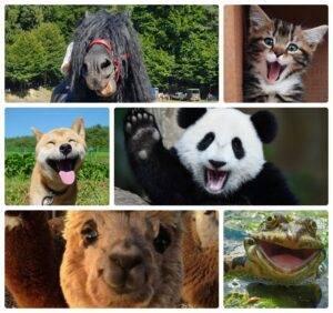 4 octombrie. Sărbătorim astăzi Ziua internațională a animalelor